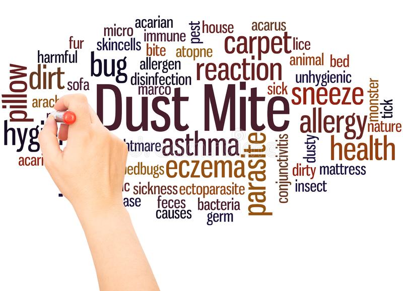 Dust mite word cloud hand writing concept. On white background royalty free stock photo