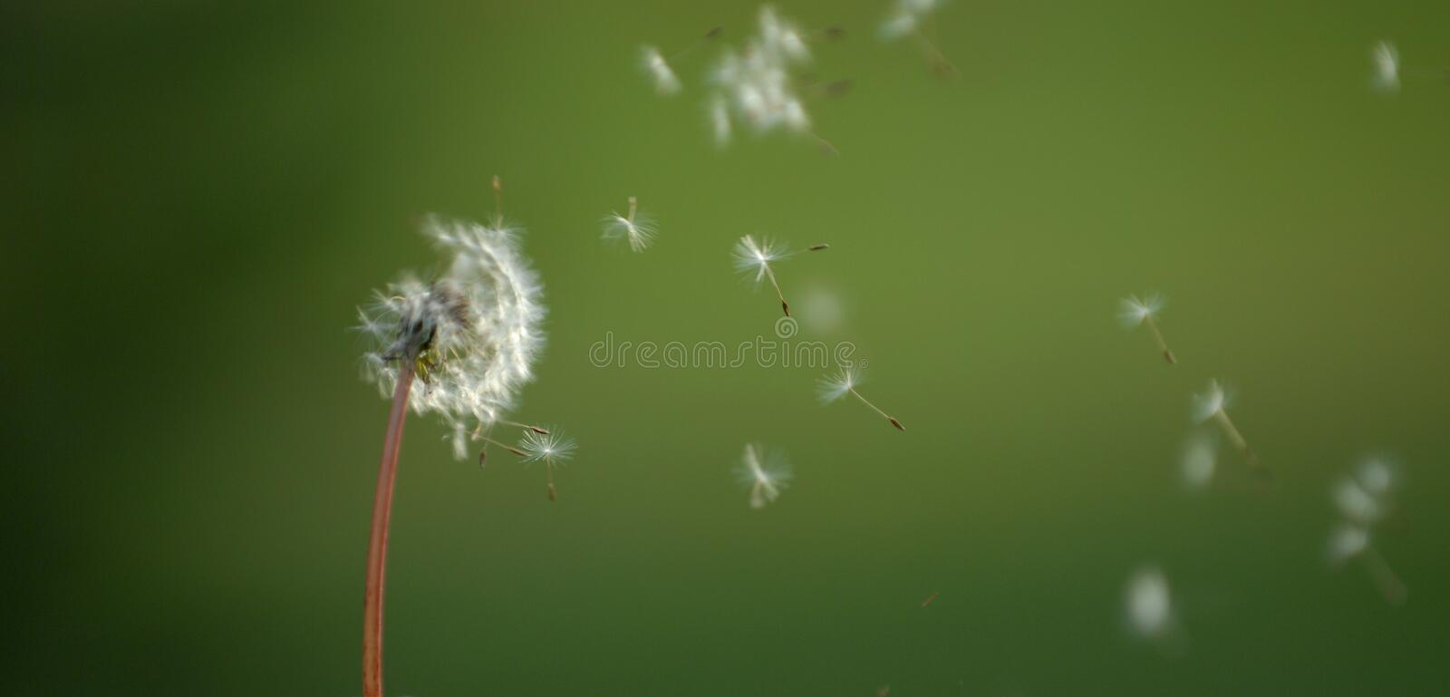 Dust in the wind royalty free stock image