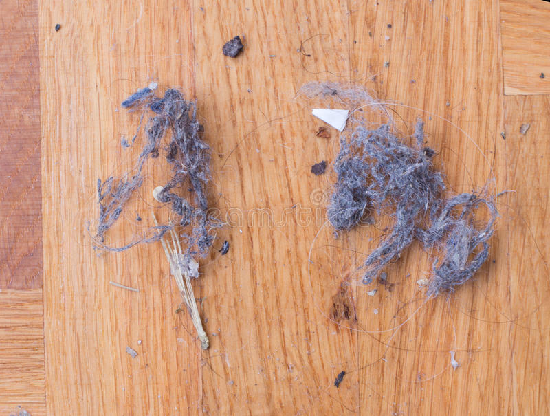 Dust on wooden floor. Top view of dust and hair clot on parquet floor. Housework concept stock image