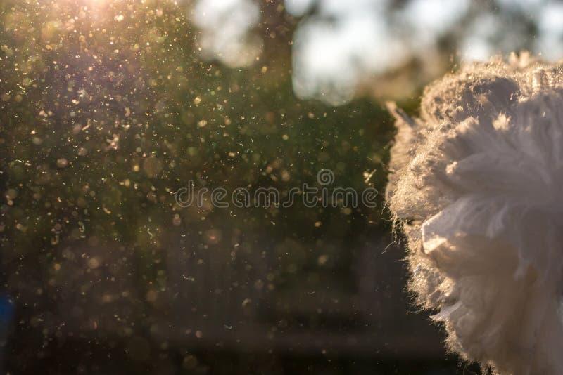 Dusts skakas i solljuset efter huslokalvård arkivbilder