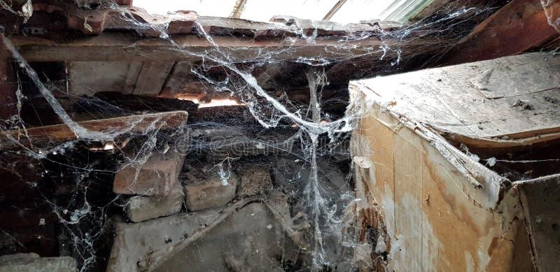 [Image: dusty-attic-lot-cobwebs-white-insect-con...677714.jpg]