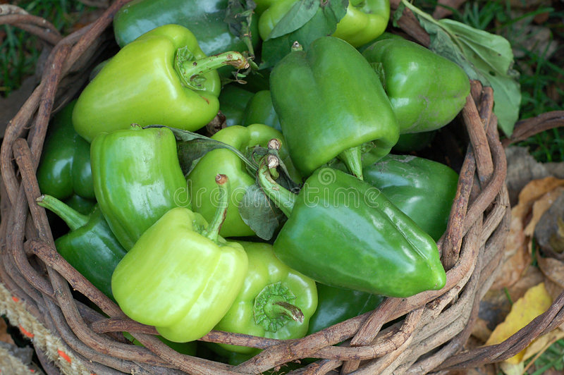 Dusty Peppers in basket royalty free stock photos