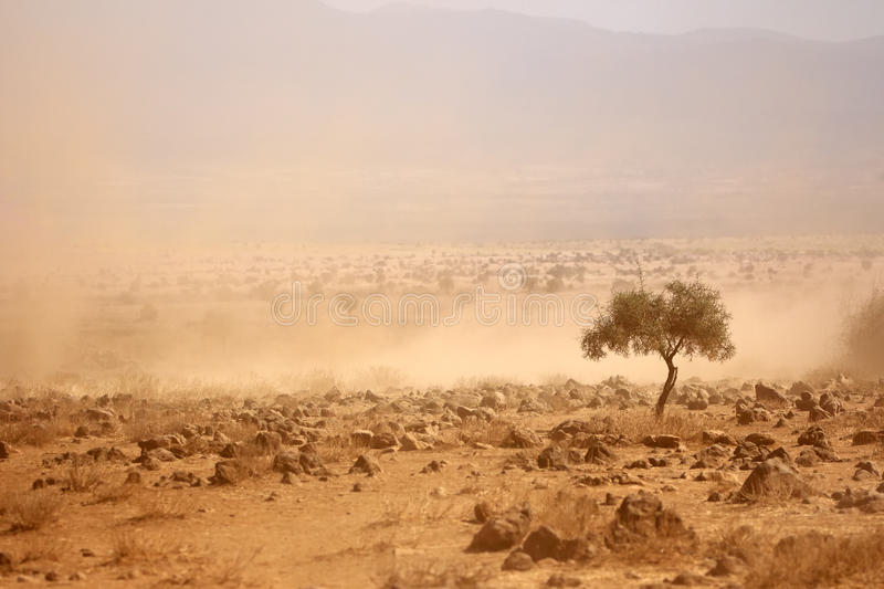 Dusty plains during a drought. Dusty plains during a severe drought, Kenya royalty free stock photography