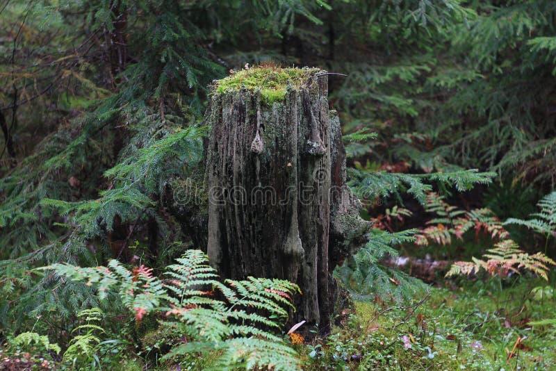 Dusza drewna zdjęcia stock