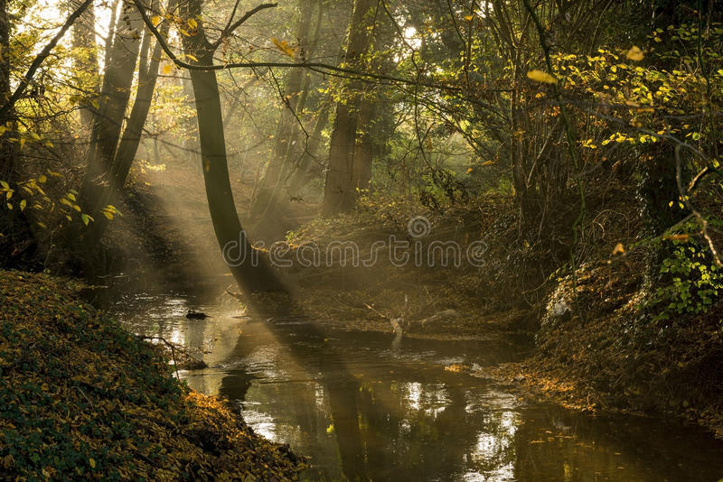 """Dutch brook in the autumn afternoon sun. Dutch brook called """"Boven-Slinge"""" in the autumn afternoon sun in the East of the Netherlands stock photo"""