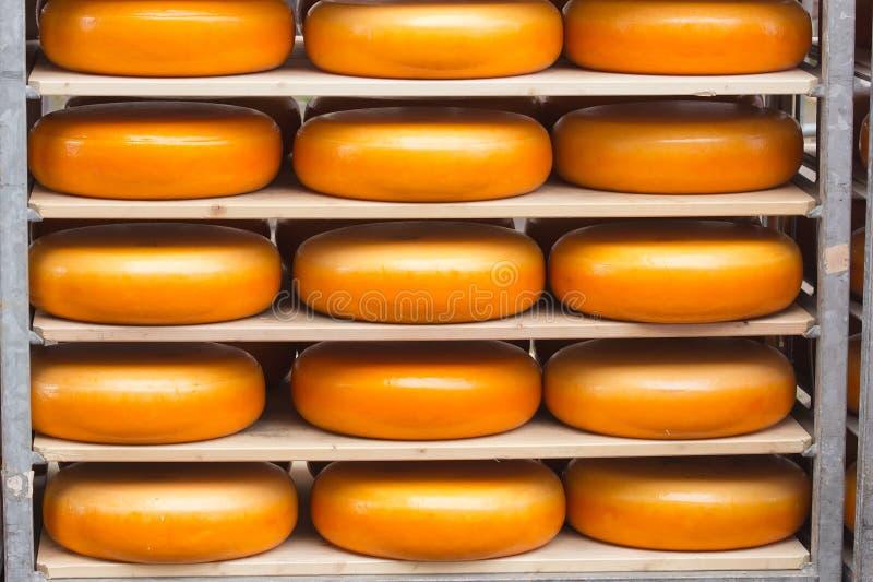 Dutch Cheese Stock Photos