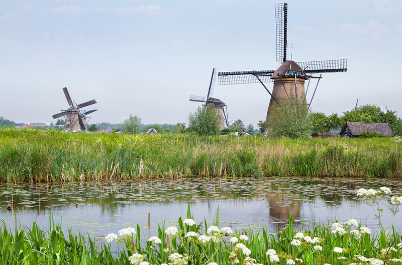 Dutch country landscape with windmills in spring. Dutch country landscape with windmills and blooming Cow parsley at the water side in spring at Kinderdijk, the royalty free stock photos