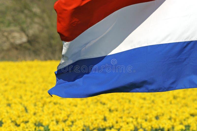 Dutch flag royalty free stock photo