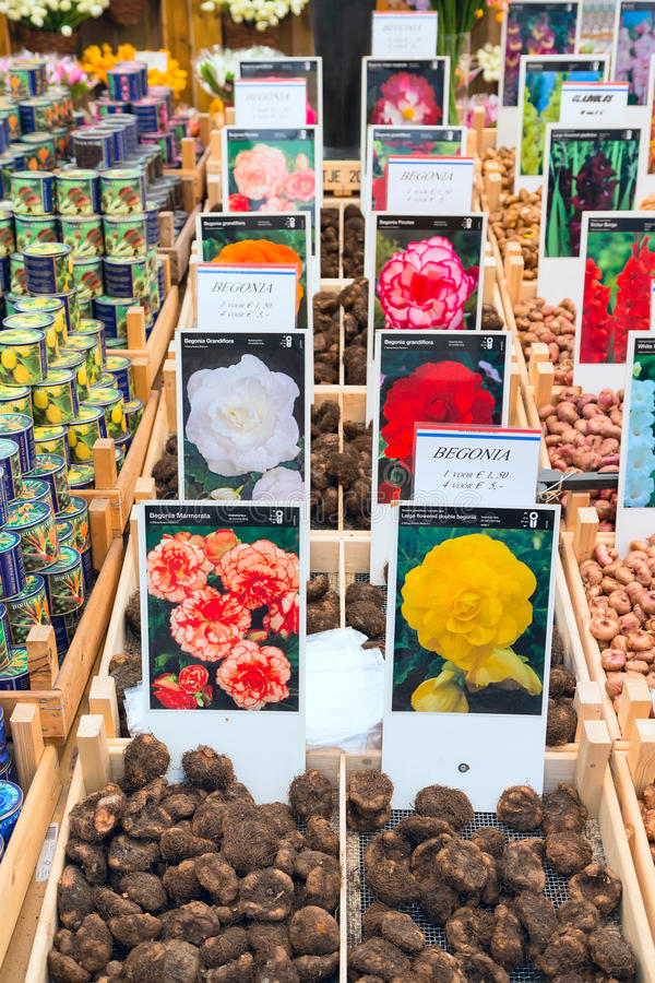 Dutch flower market, people in Amsterdam, Holland stock images
