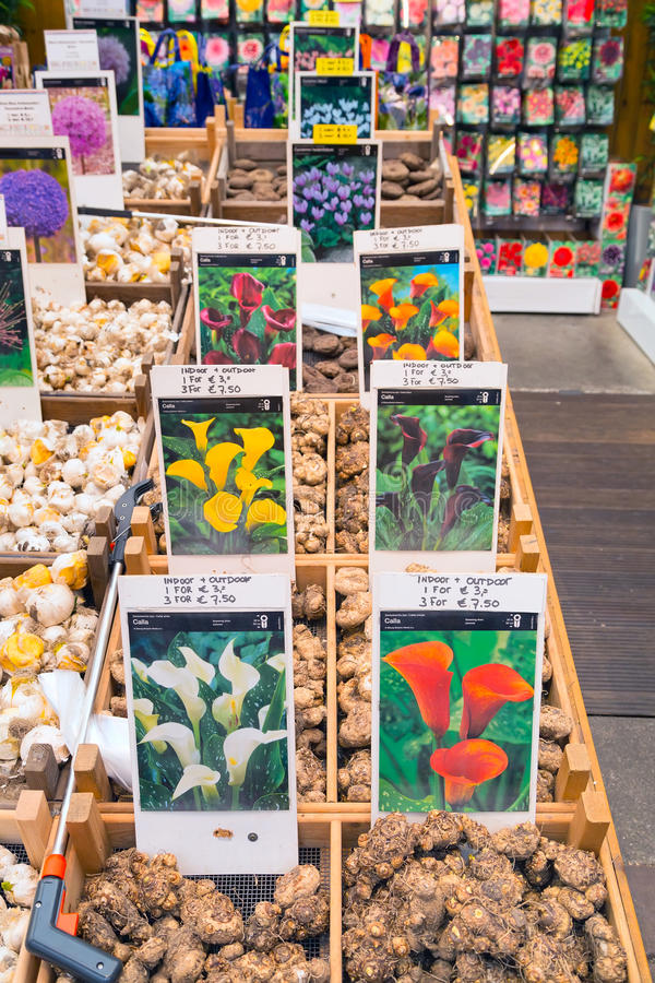 Dutch flower market, people in Amsterdam, Holland stock image