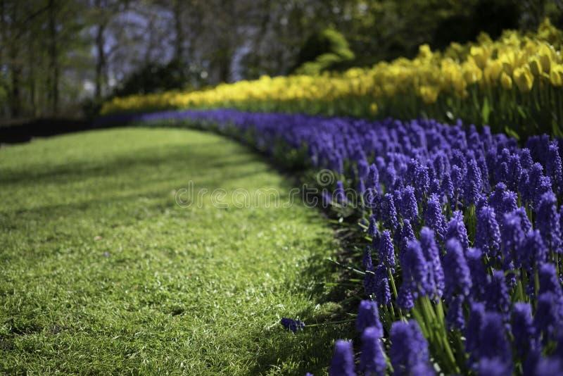 Dutch Flower Trail royalty free stock image