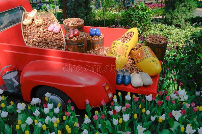 Dutch garden still life with lots of tulip bulbs and clogs on bed of red truck in flowerbed with flowering colorful tulips stock photography