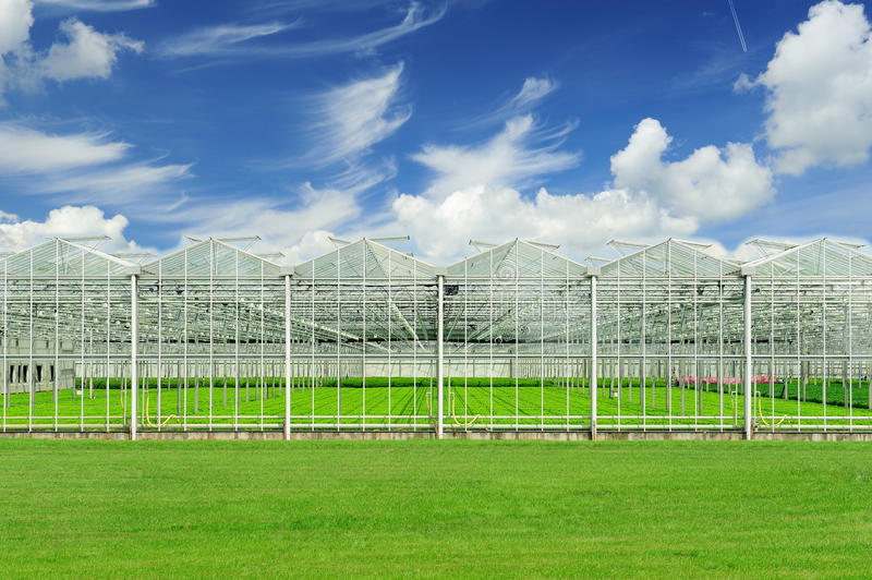 Dutch greenhouse stock photography