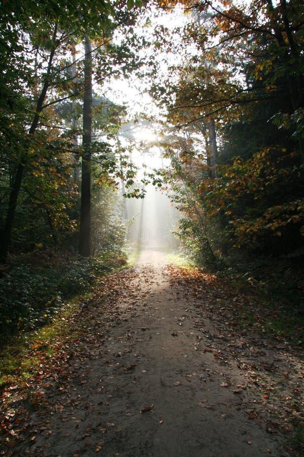 dutch jesieni las fotografia stock