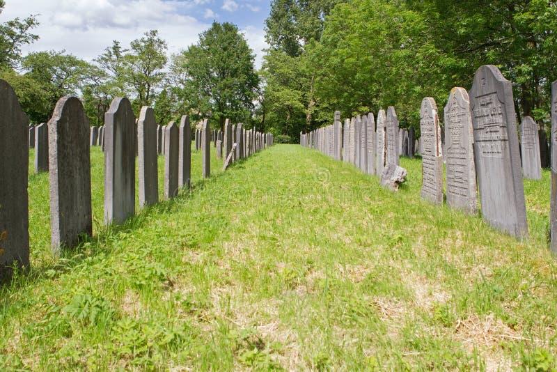 Dutch-Jewish Cemetery: main part in Diemen cemetery royalty free stock photos