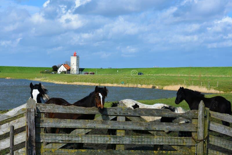 dutch krajobrazu zdjęcia stock