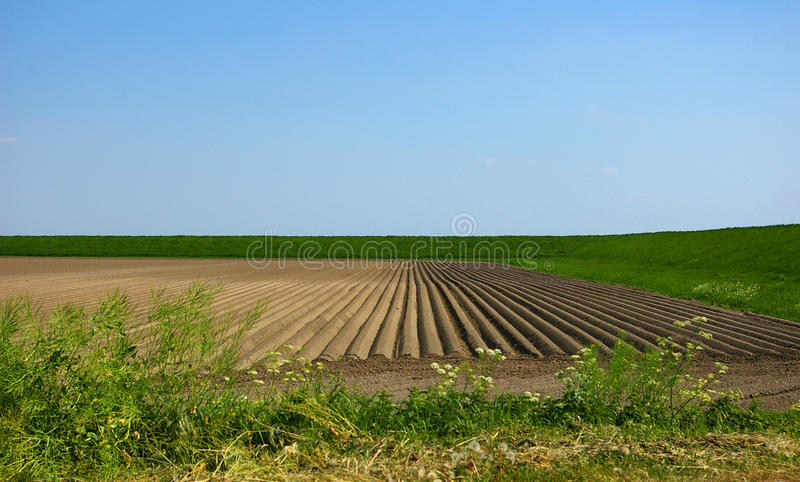 Dutch landscape. Typical Dutch landscape on the island Goeree Overflakkee royalty free stock photo