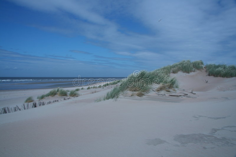 Dutch landscape dune stock photography