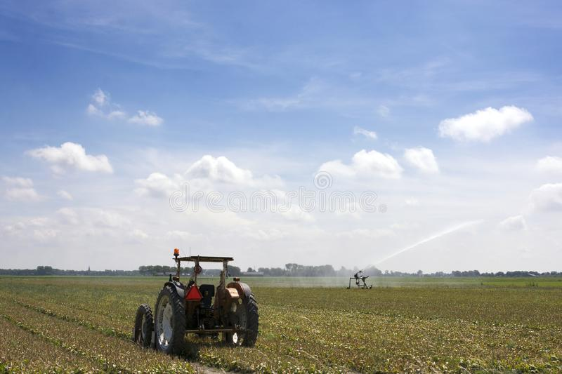 Dutch landscape with field of overblown bulbs, tractor, irrigation, blue sky, clouds, rural environmentfiled royalty free stock image