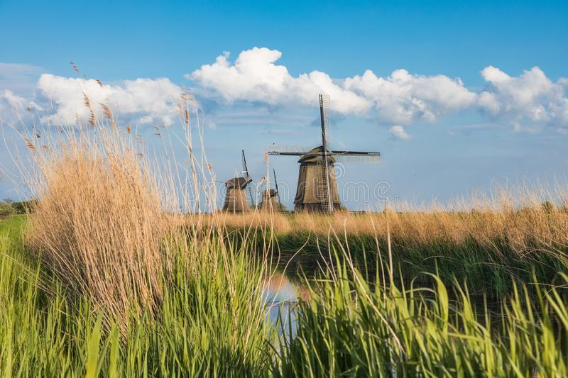 Dutch landscape with three windmills. In the background stock images