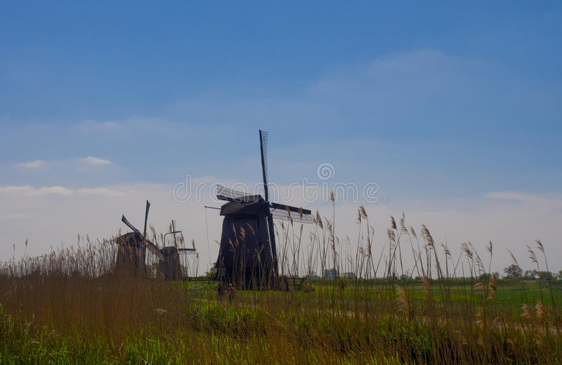 Dutch meadow and blue sky with windmills, Zaanse Chans, Netherlands, Europe stock photos
