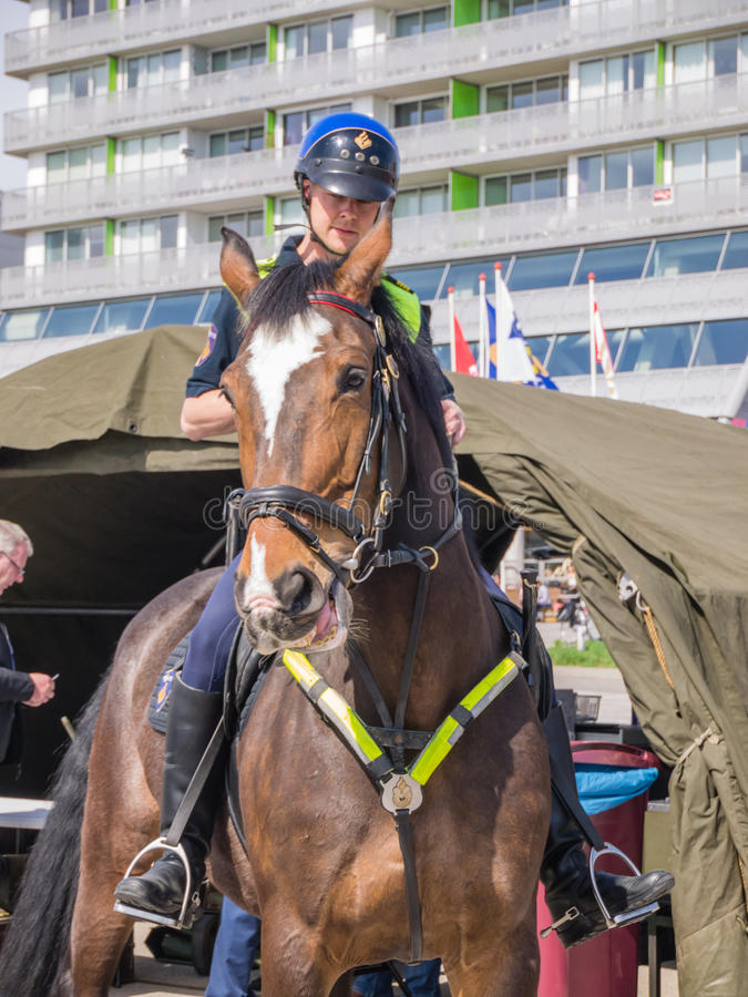 Dutch mounted police. ALMERE, NETHERLANDS - 12 APRIL 2014: Dutch mounted police showing their skills at the first National Security Day held in the city of royalty free stock image