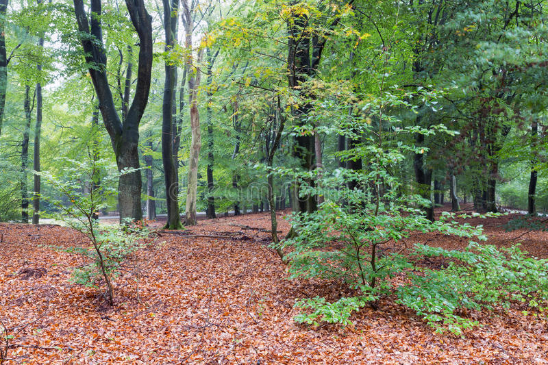 Dutch National Park Veluwe with trees in autumn stock photo