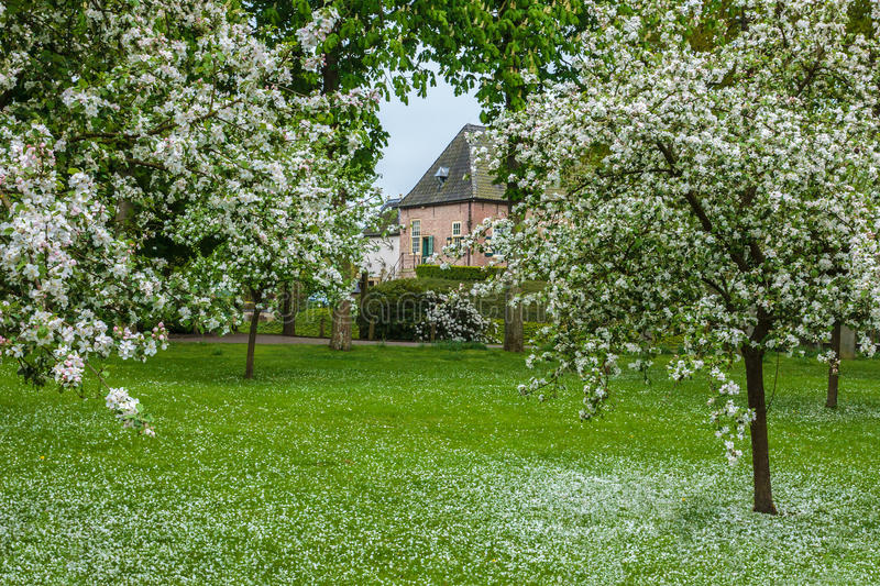 Dutch orchard with blossoming trees on a medieval estate. In Steenwijk Overijssel royalty free stock photos
