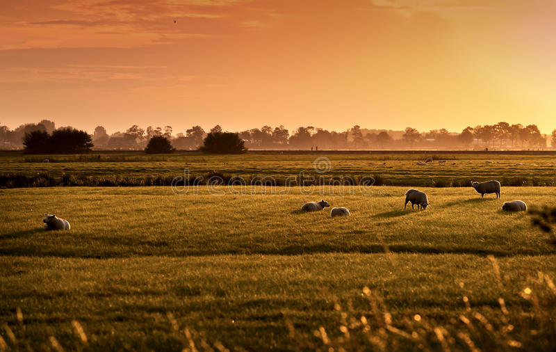 Dutch pastoral at sunrise royalty free stock photography