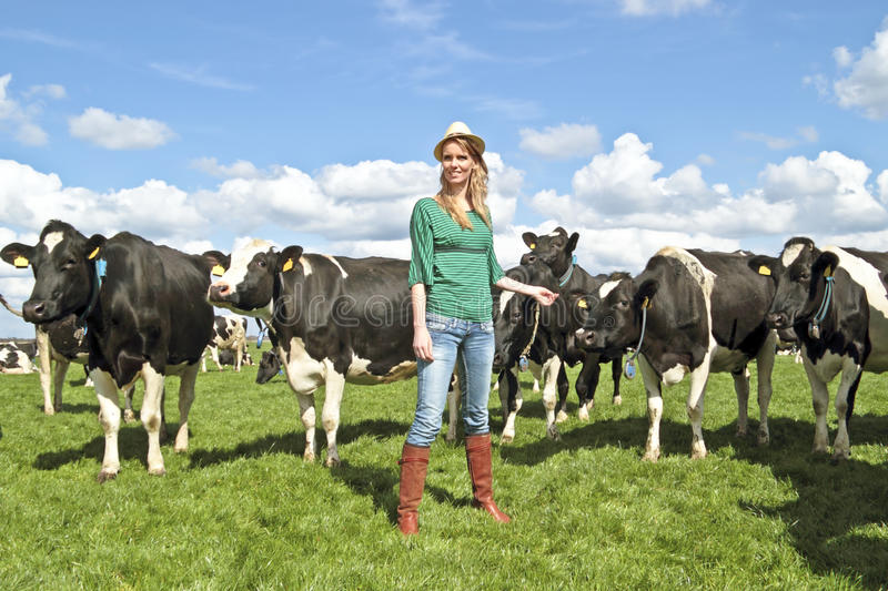 Dutch peasant woman with her cows stock photo