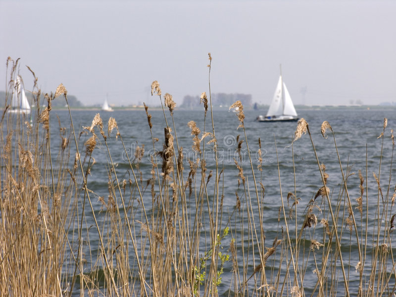 Download Dutch reed stock image. Image of sail, source, green, ecology - 112795