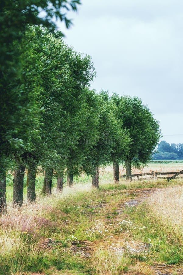 Dutch rural landscape stock photos