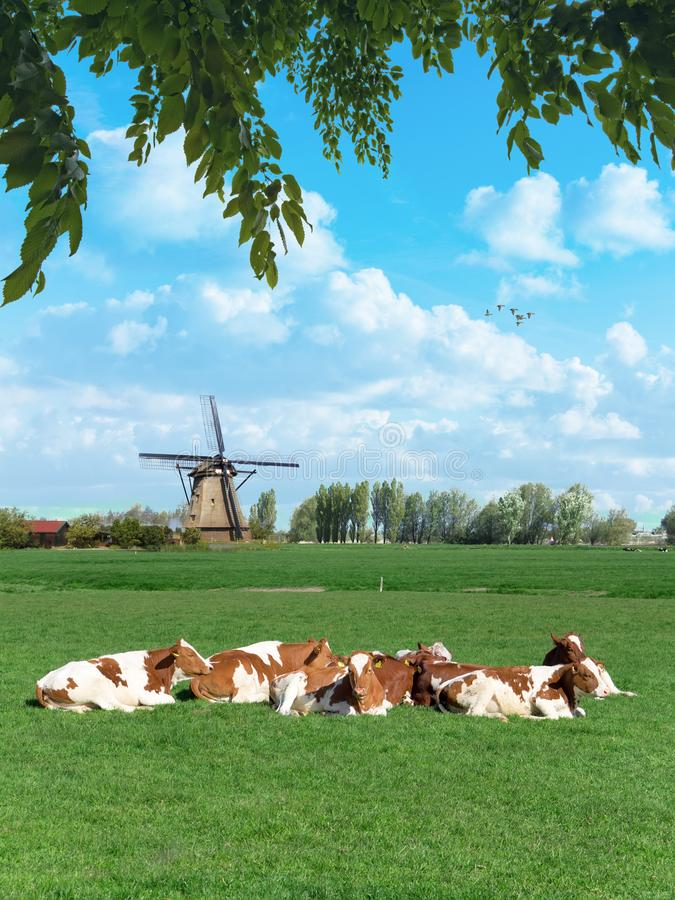 Dutch rural spring landscape royalty free stock photos