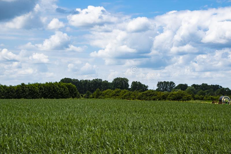Dutch Summer landscape with green grass and cloudy blue sky stock photo