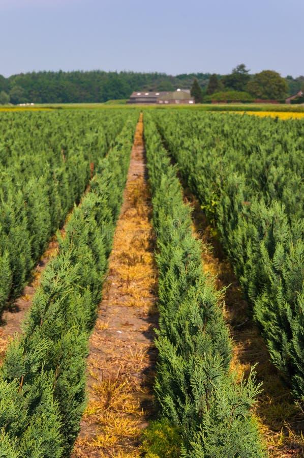 Download Dutch tree nursery stock photo. Image of growth, dutch - 24963892