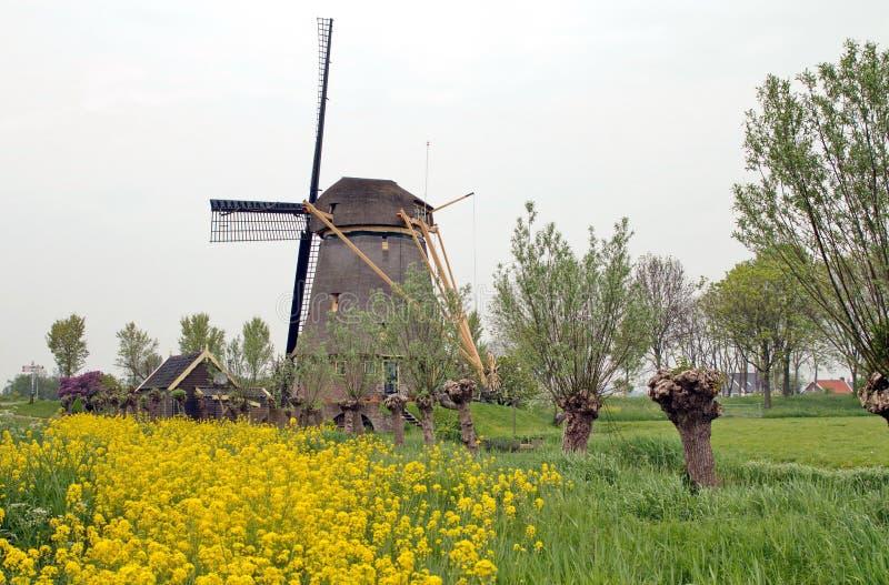 Dutch Windmill 'De Zwaan' stock photos