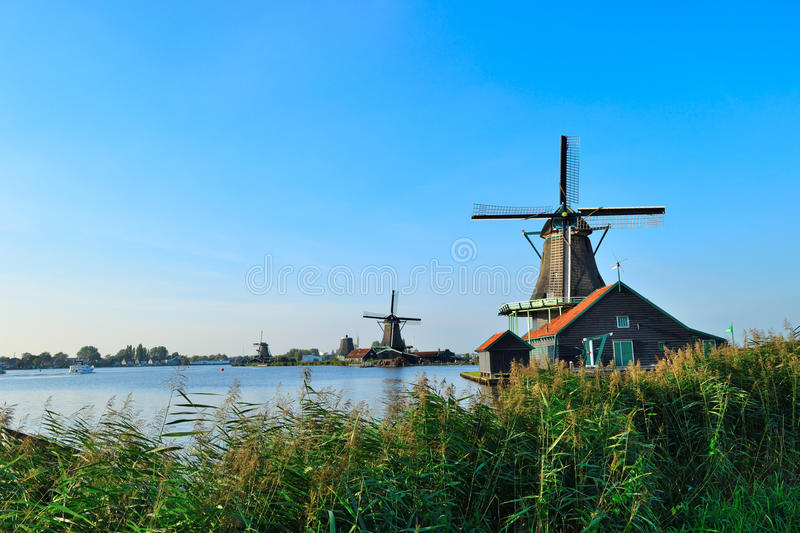 Dutch windmills in summer. With green reed plot on a background of blue sky royalty free stock images