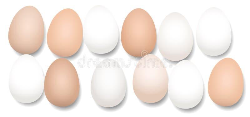 Dutzend Eier zwölf Stücke lizenzfreie abbildung