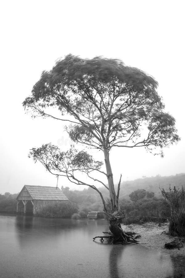 Duva berg Tasmanien för sjövagga i vinter arkivfoto