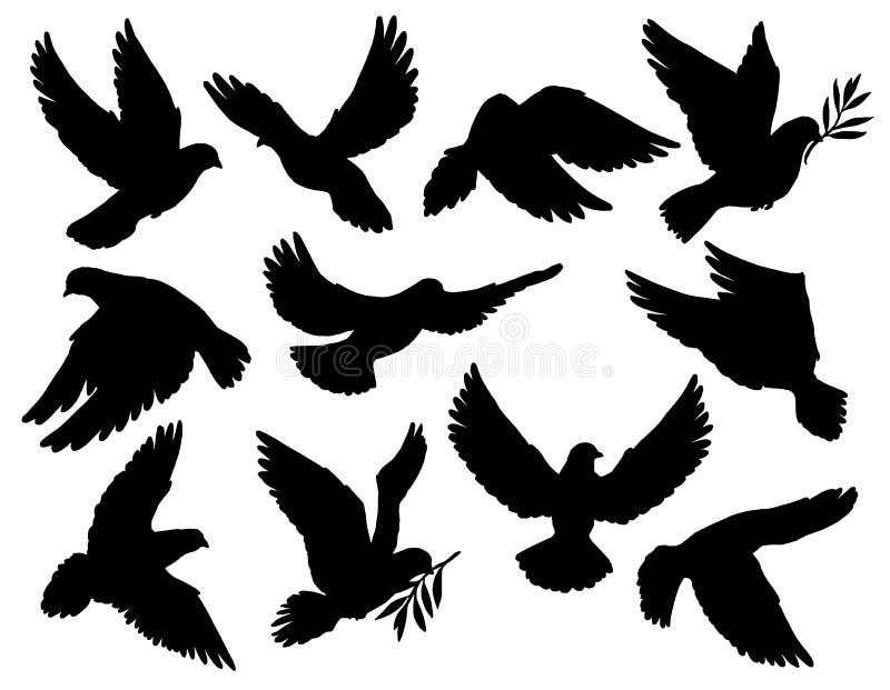 Duva- eller duvafåglar rymmer konturer för olivgrön filial stock illustrationer