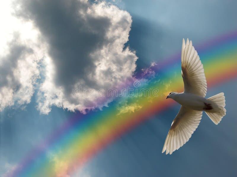 Duva och regnbåge arkivfoton