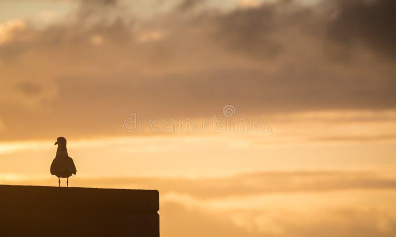 Duva som håller ögonen på solnedgången arkivfoto