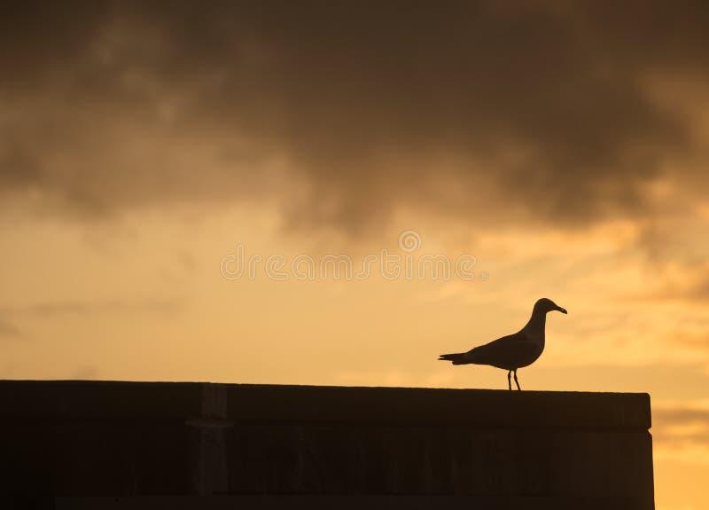 Duva som håller ögonen på solnedgången royaltyfri foto