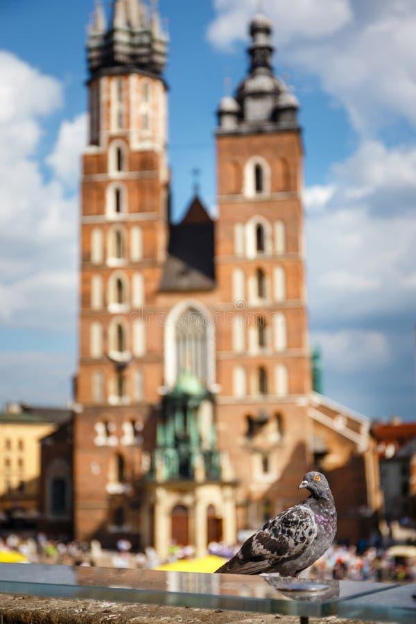 Duva som sitter på en stenvägg, i backrounden den huvudsakliga marknadsfyrkanten, Krakow, Polen arkivfoton