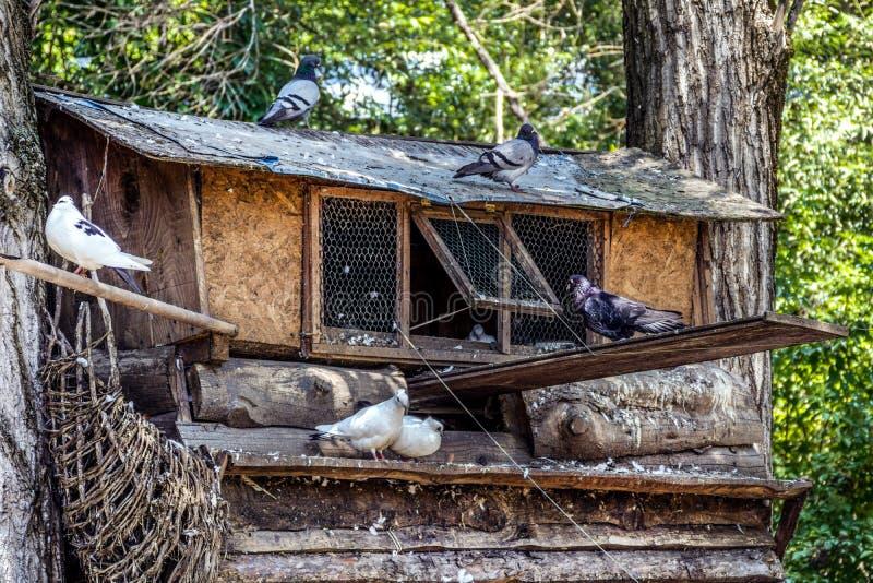 Duvafågelhuset på stort träd i naturligt parkerar royaltyfri bild