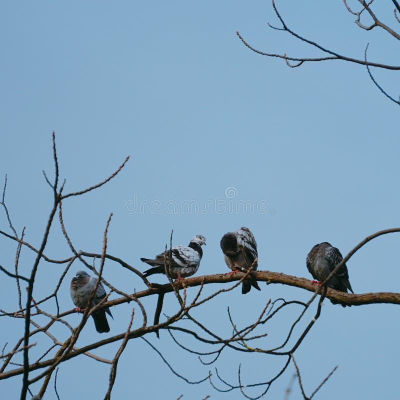 Duvafågeln i parkerar i naturen royaltyfri fotografi
