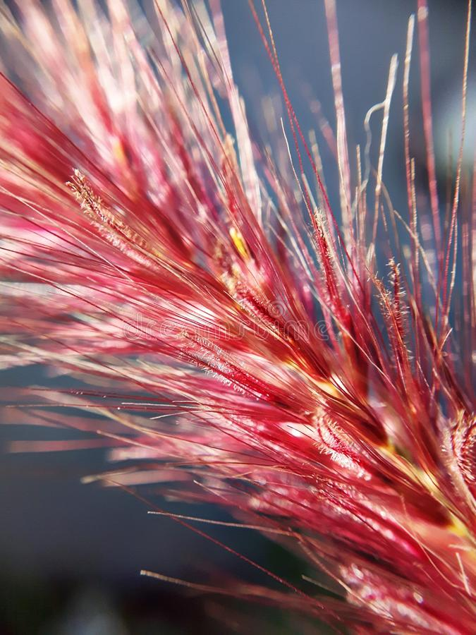 Duvet de fleur images libres de droits