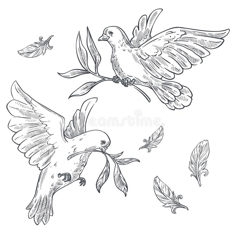 Duvor eller duvor med den olivgröna filialen eller att fatta i den isolerade näbb skissar royaltyfri illustrationer
