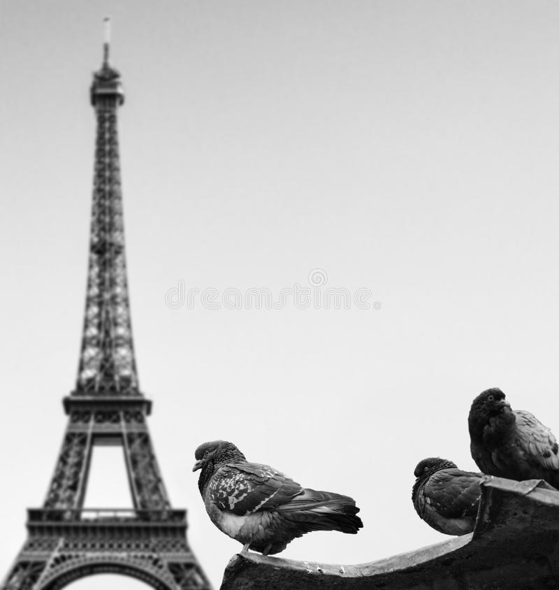 Duvor mot Eiffeltorn - Paris Frankrike arkivbild