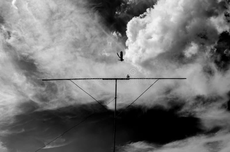 Duvor på en roost mot himlen med moln royaltyfria foton